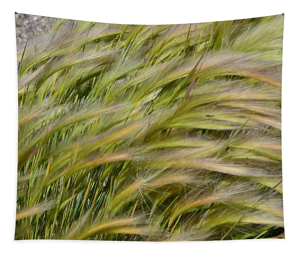 Lake Tapestry featuring the photograph Beach Grasses by Wendy Raatz Photography