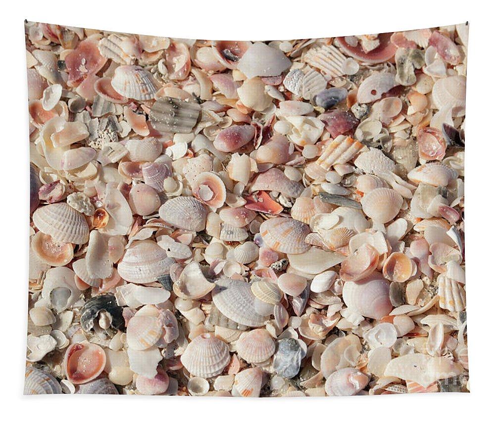 Beach Tapestry featuring the photograph Beach Seashells by Carol Groenen