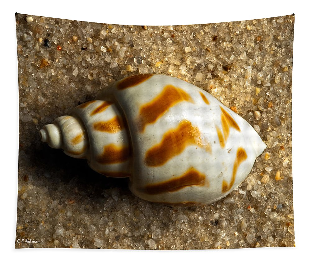 Shell Tapestry featuring the photograph Beached Shell by Christopher Holmes