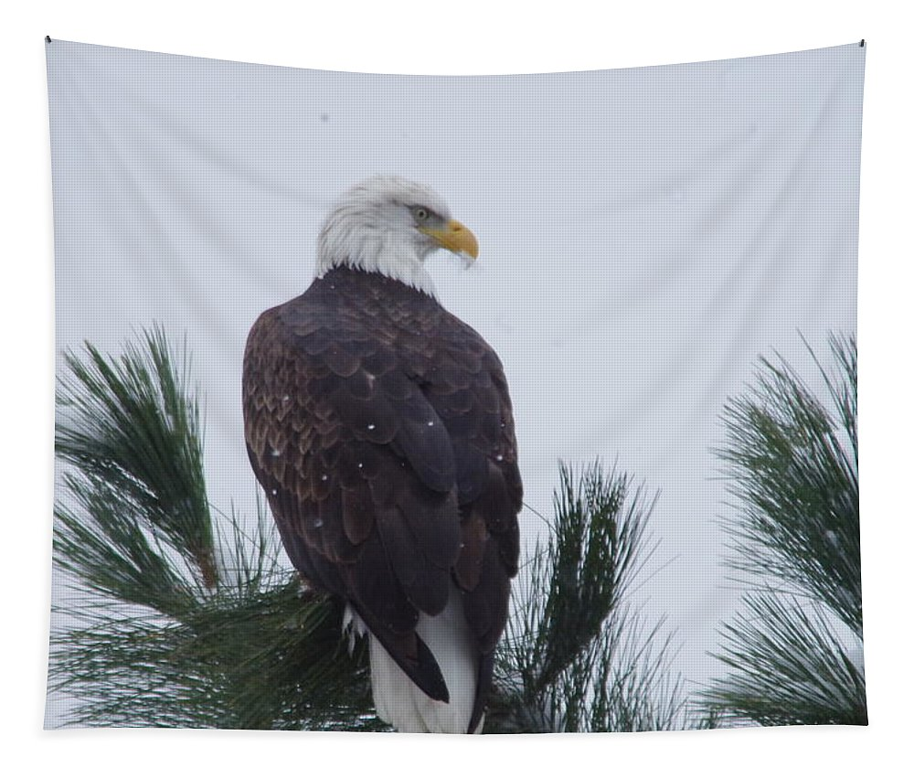 Bald Eagle Tapestry featuring the photograph Beautiful Bald Eagle by Jeff Swan