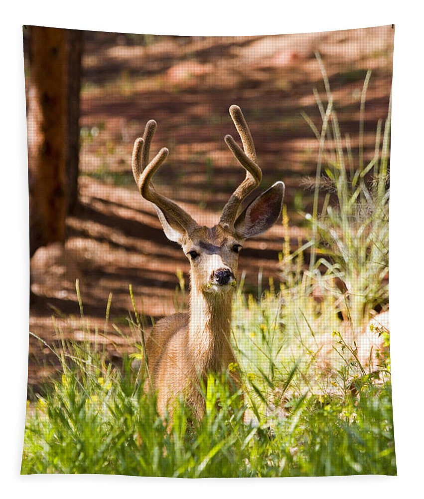 Deer Tapestry featuring the photograph Beautiful Buck Deer In The Pike National Forest by Steve Krull