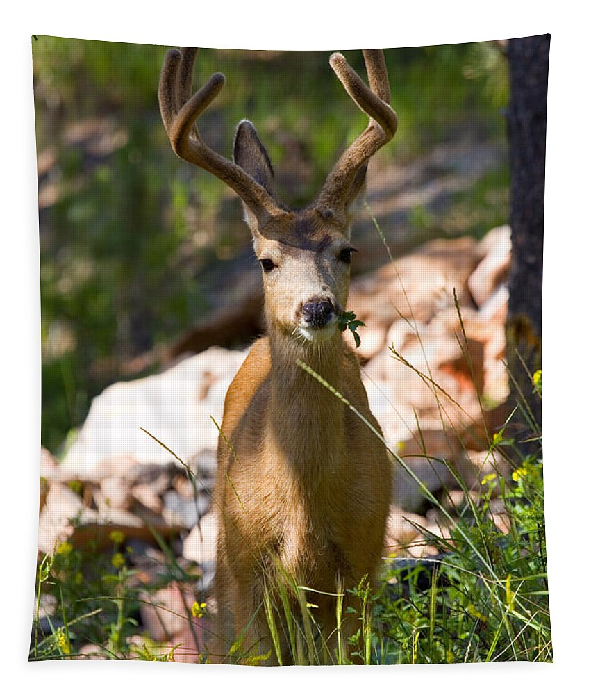 Mule Deer Tapestry featuring the photograph Beautiful Buck In The Pike National Forest by Steve Krull