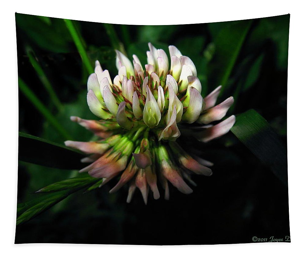 Clover Tapestry featuring the photograph Beautiful Clover Blossom by Joyce Dickens
