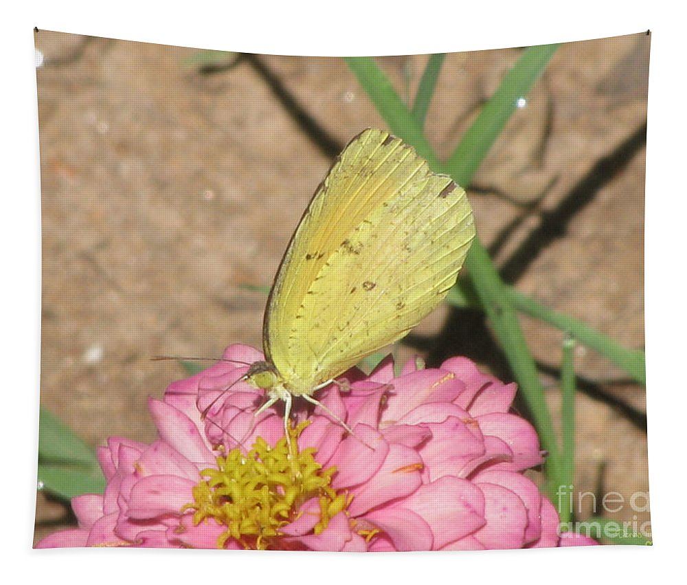 Insect Tapestry featuring the photograph Beautiful Eyes by Donna Brown