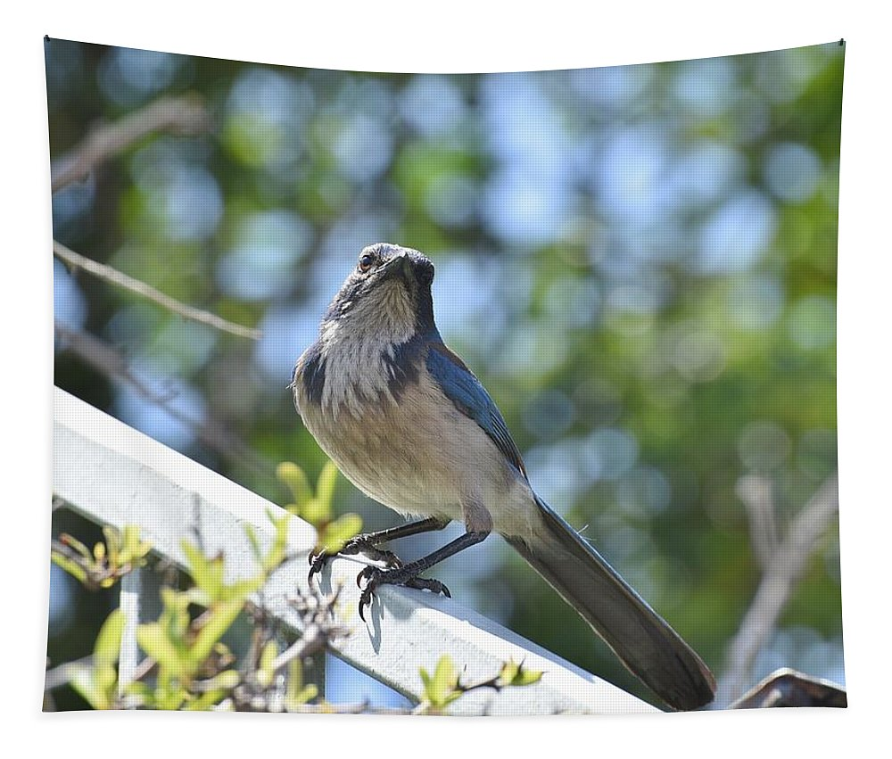 Linda Brody Tapestry featuring the photograph Beautiful Jay II by Linda Brody