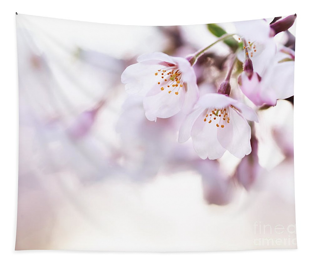 Blossom Tapestry featuring the photograph Beautiful Pink Cherry Blossom by Oleksiy Maksymenko