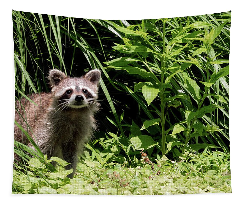 Racoon Tapestry featuring the photograph Beautiful Racoon by Sam Rino