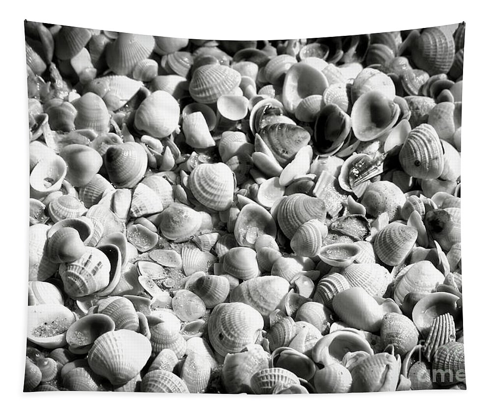 Shells Tapestry featuring the photograph Beautiful Seashells Black And White by Carol Groenen