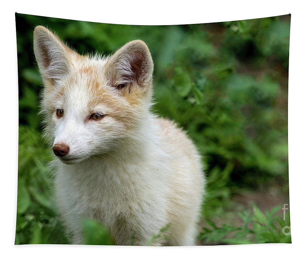 Fox Tapestry featuring the photograph Beautiful Young Fox Portrait by Sam Rino