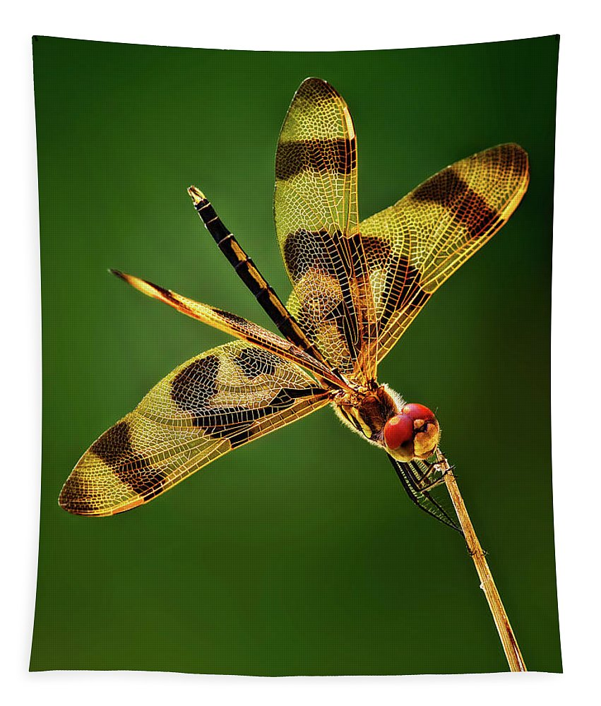 Dragonfly Tapestry featuring the photograph Beauty Marks by Pedro Lastra