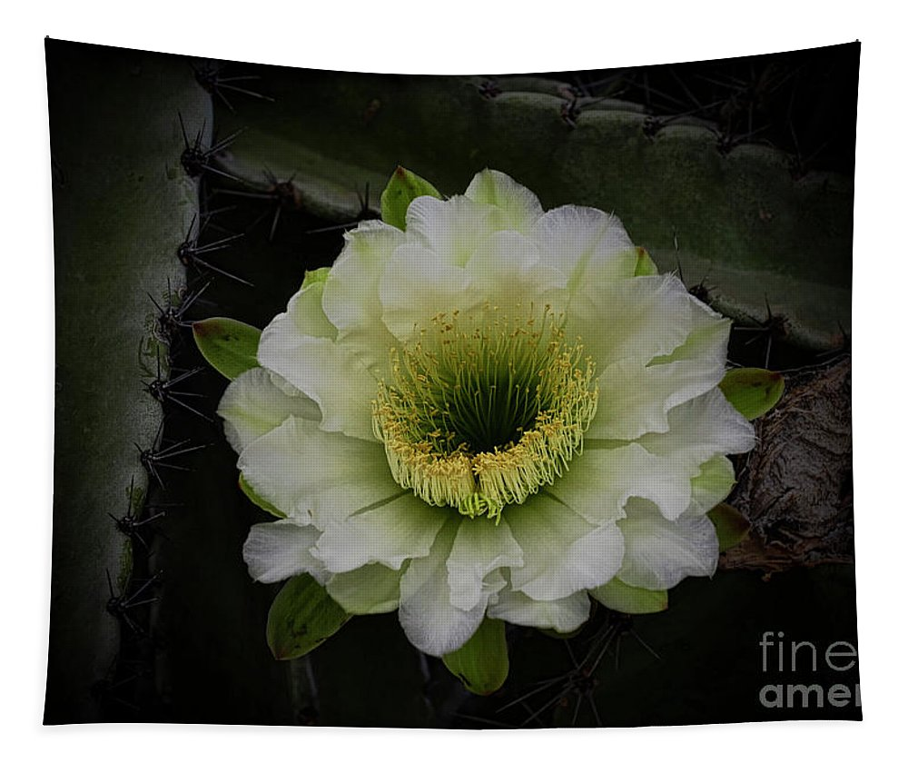 White Cactus Flower Tapestry featuring the photograph Beauty Within by Saija Lehtonen