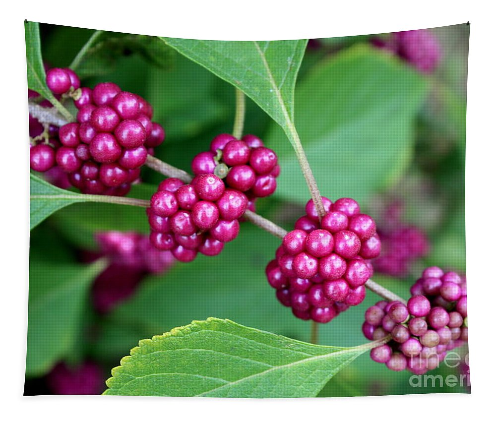 Beautyberry Bush Tapestry featuring the photograph Beautyberry Bush by Carol Groenen