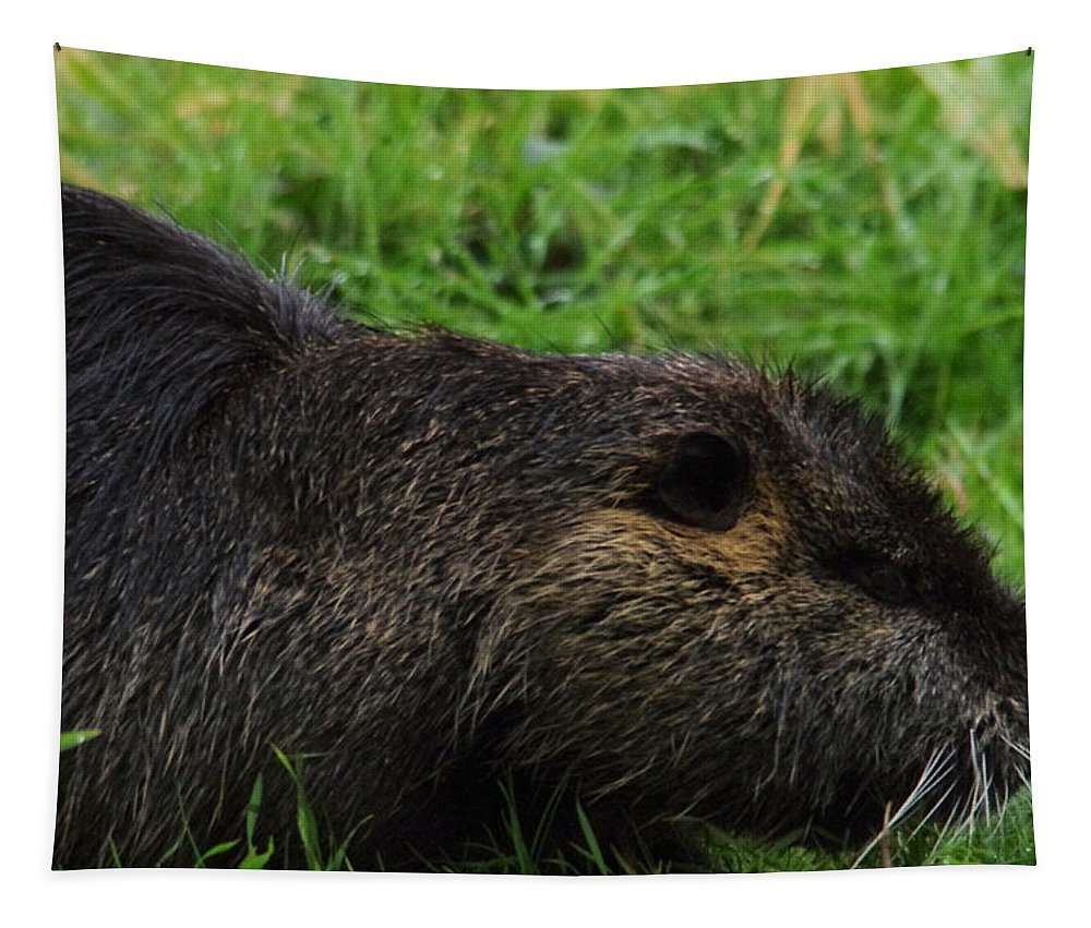 Beaver Tapestry featuring the photograph Beaver Whiskers by Jeff Swan