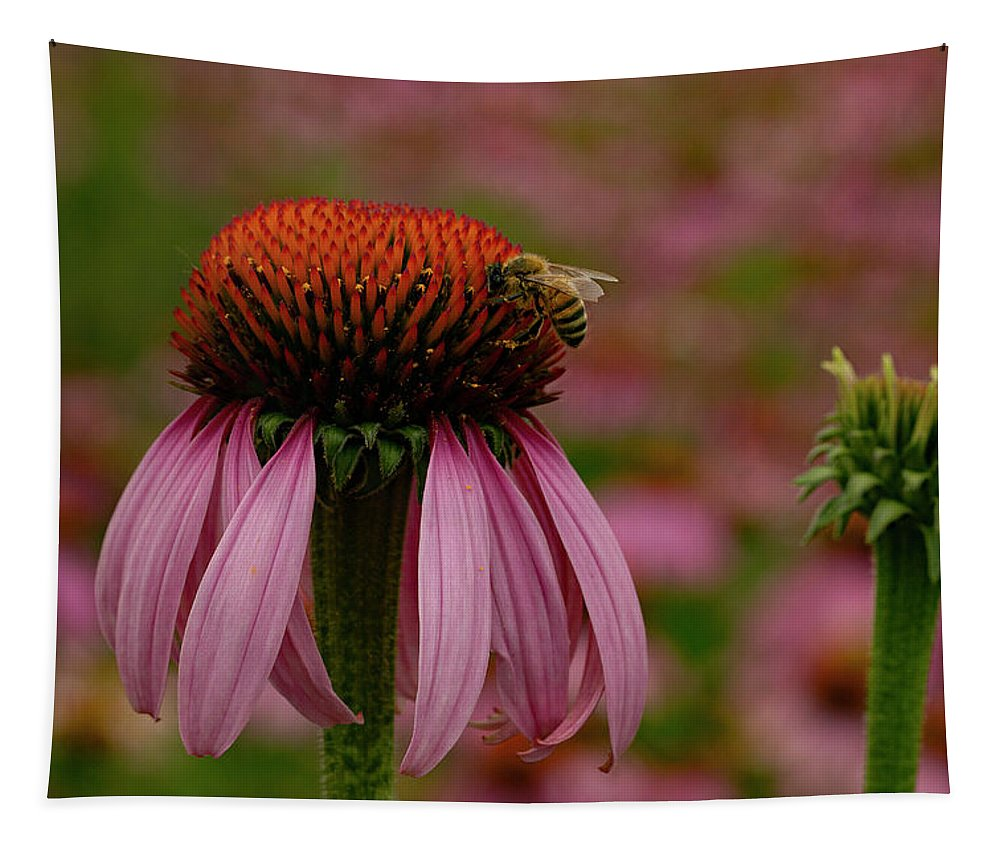 Jean Noren Tapestry featuring the photograph Bee On Echinacea by Jean Noren