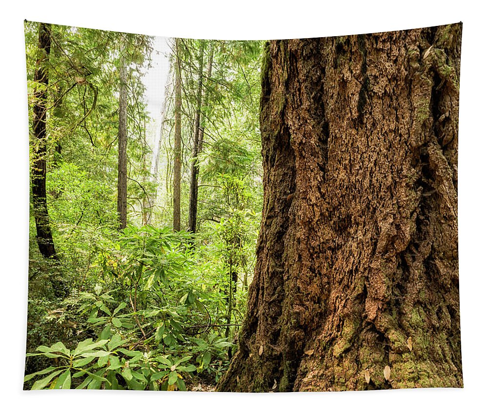 Old Growth Forest Tapestry featuring the photograph Been Around A Long Long Time by Belinda Greb