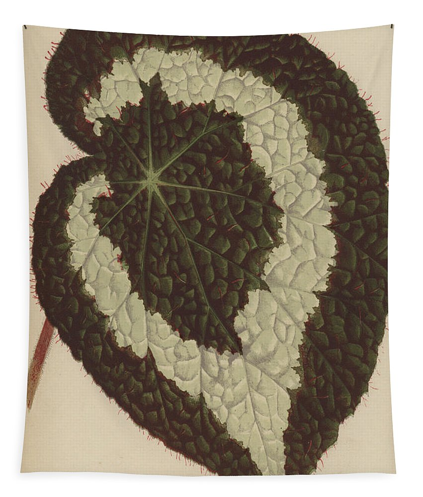 Begonia Rex Tapestry featuring the painting Begonia Rex by English School