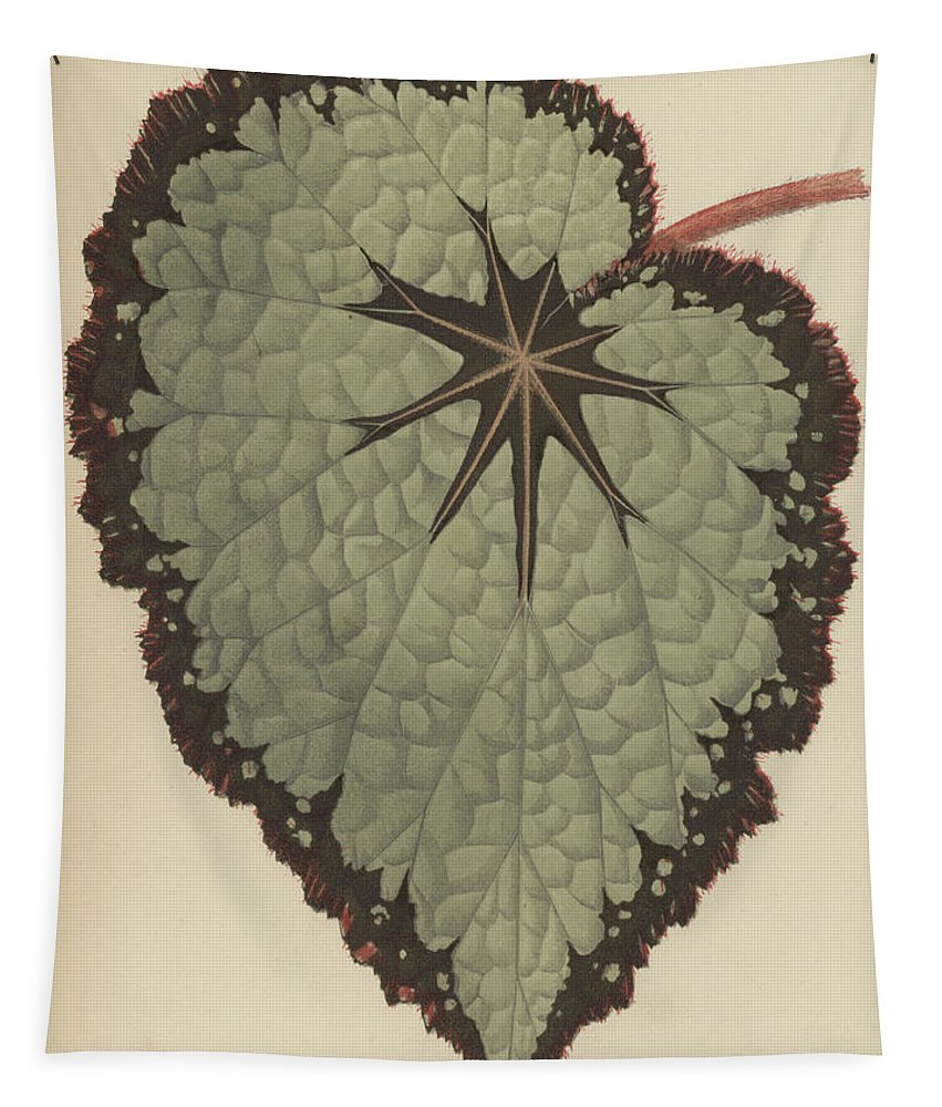 Begonia Rex Tapestry featuring the painting Begonia Rex, Variety Isis by English School