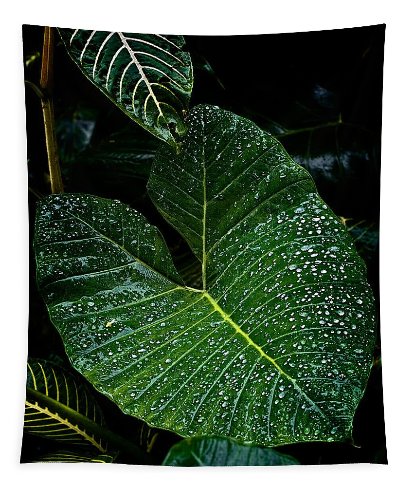 Leaf Tapestry featuring the photograph Bejeweled Leaf by Christopher Holmes