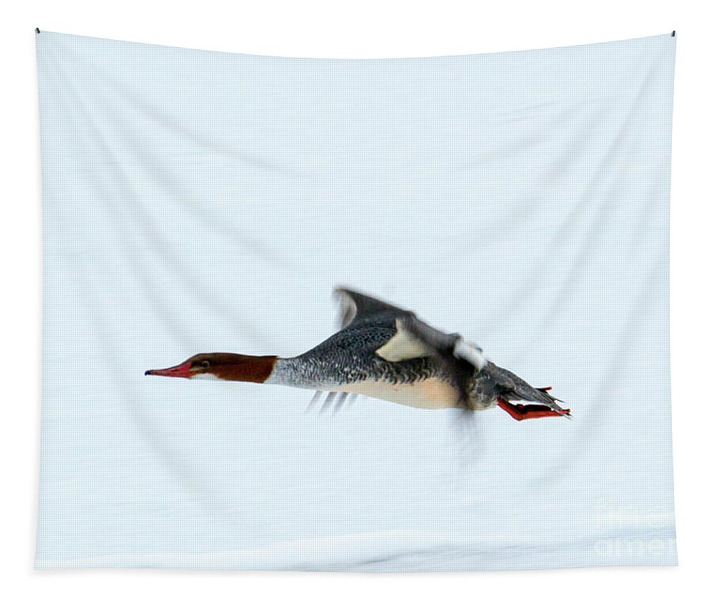 Merganser Tapestry featuring the photograph Beneath The Radar by Mike Dawson