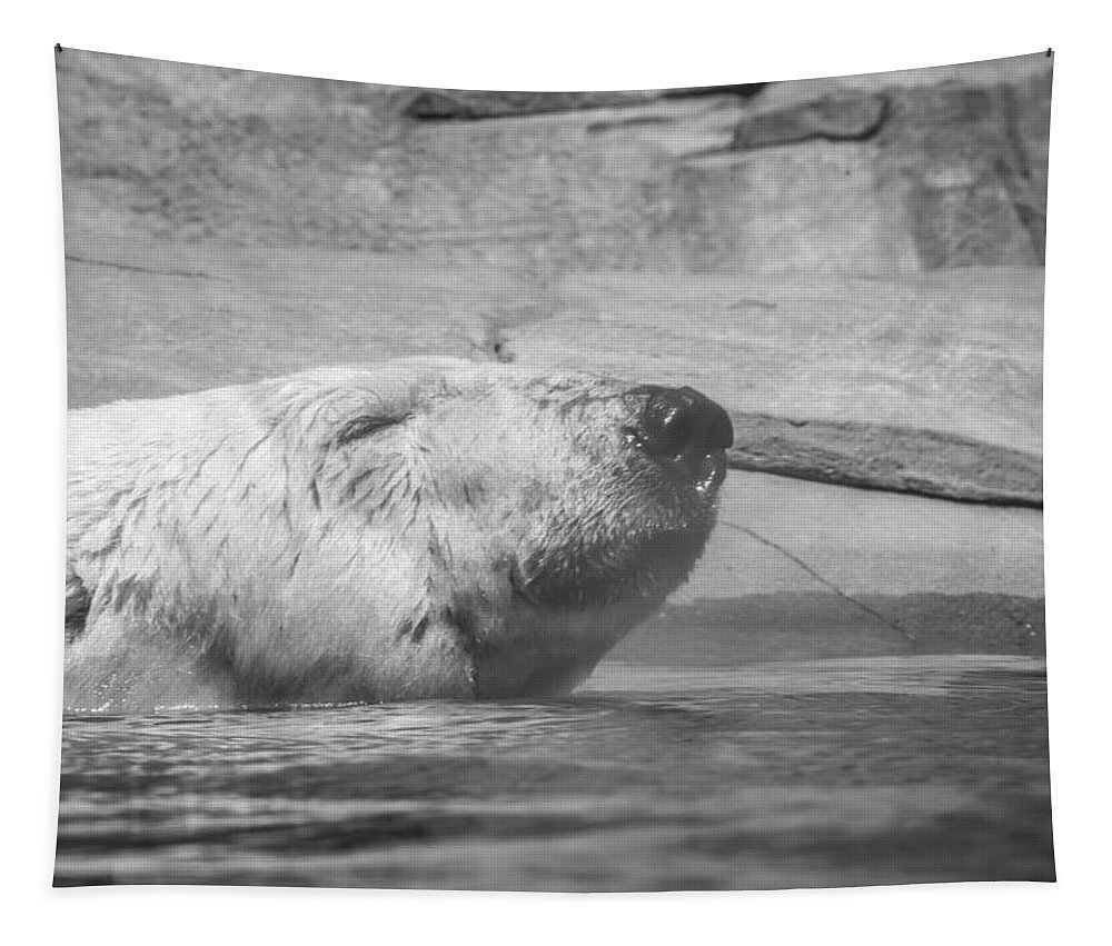 Polar Bear Tapestry featuring the photograph Berlin by Pamela Williams