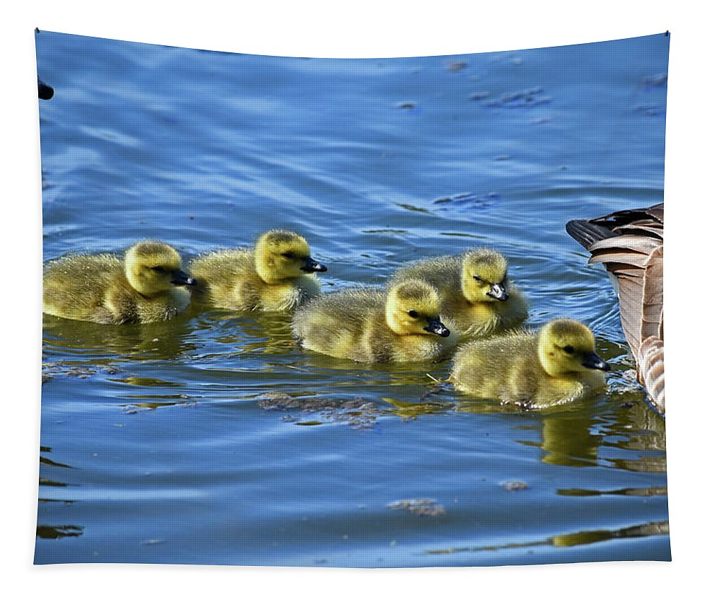 Canada Geese Tapestry featuring the photograph Between Mom And Pop by Maria Keady