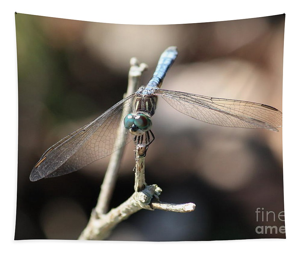 Bug Eyes Tapestry featuring the photograph Big Bug Eyes by Carol Groenen