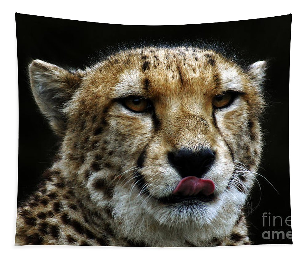 Cats Tapestry featuring the photograph Big Cats 53 by Ben Yassa
