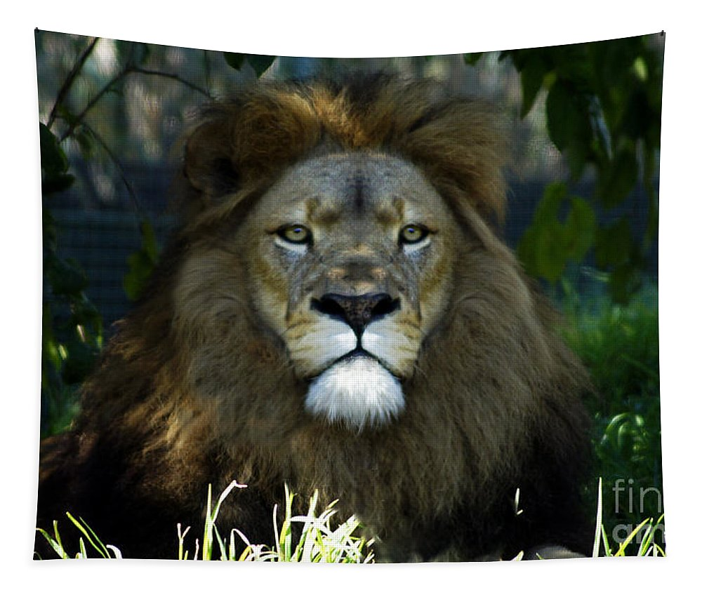 Lion Tapestry featuring the photograph Big Cats 79 by Ben Yassa