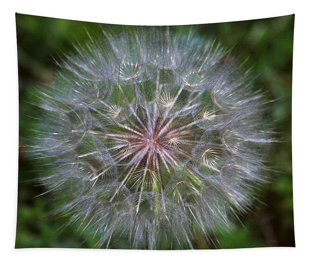 Dandelion Tapestry featuring the photograph Big Wish by Linda Sannuti