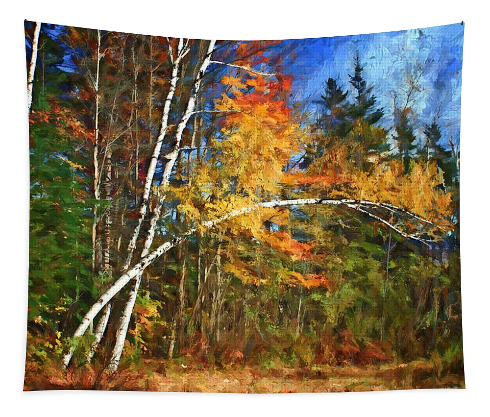 Birch Trees Tapestry featuring the photograph Birch Trees - Autumn by Nikolyn McDonald