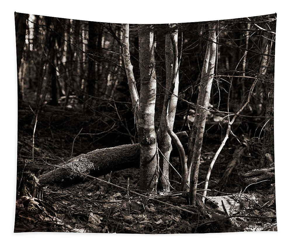 Woods Tapestry featuring the photograph Birches In The Wood by Susan Capuano