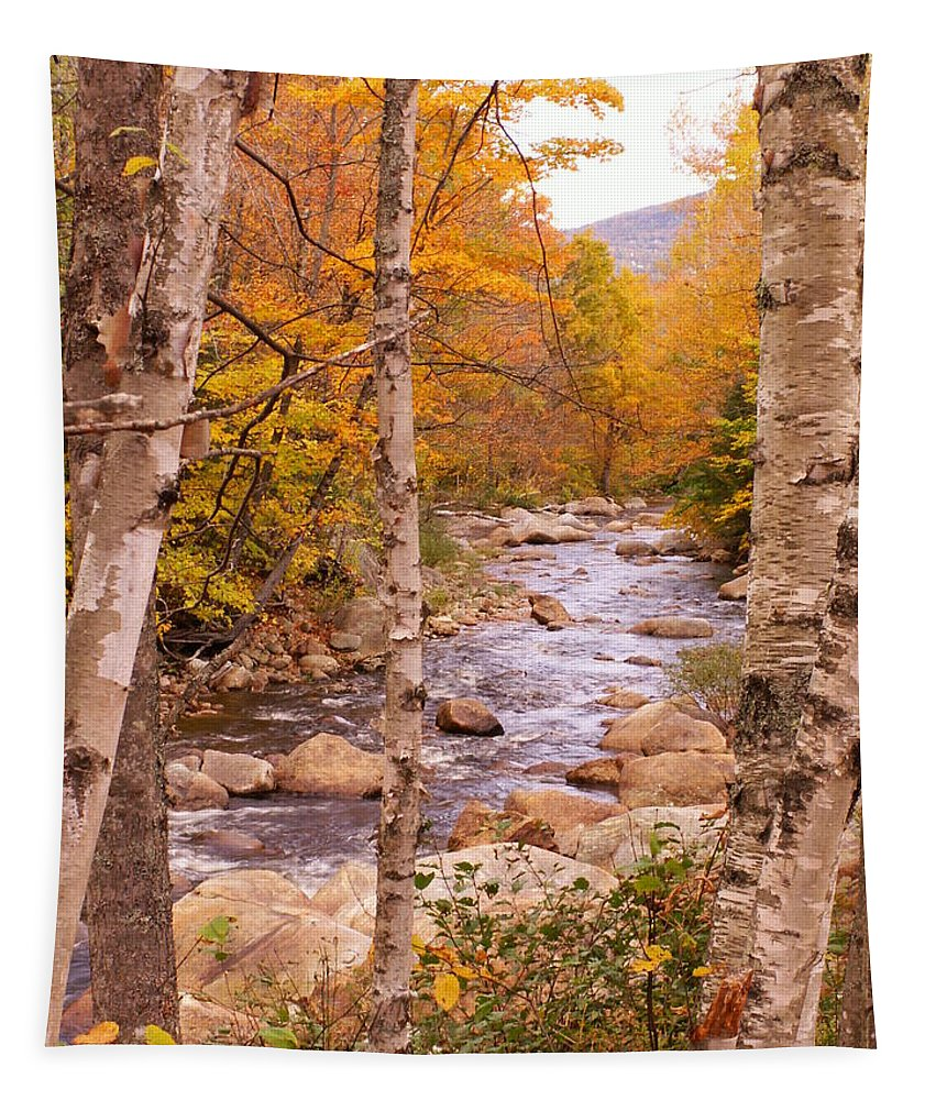Landscape Tapestry featuring the photograph Birches On The Kancamagus Highway by Nancy Griswold