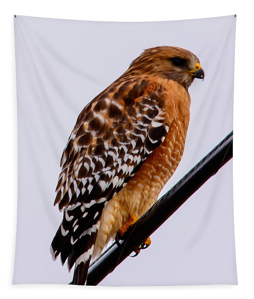 Bird Tapestry featuring the photograph Bird On A Wire With Attitude by Tikvah's Hope