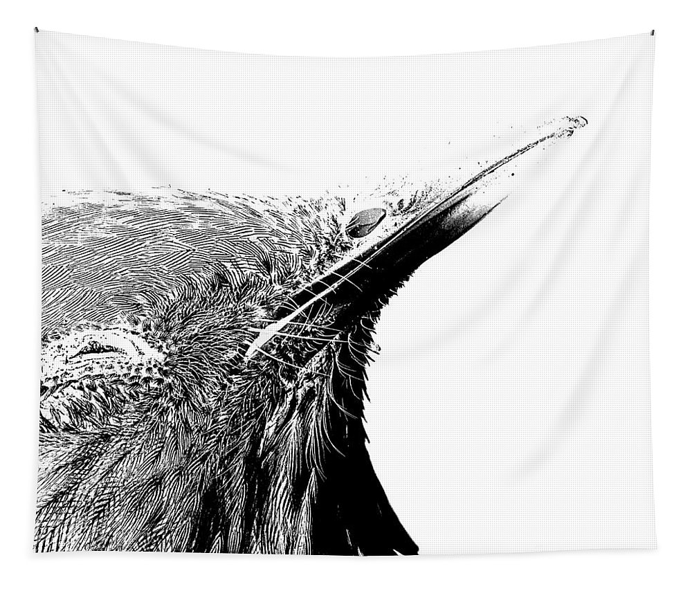 Bird Tapestry featuring the drawing Bird Transparent Background by Edward Fielding