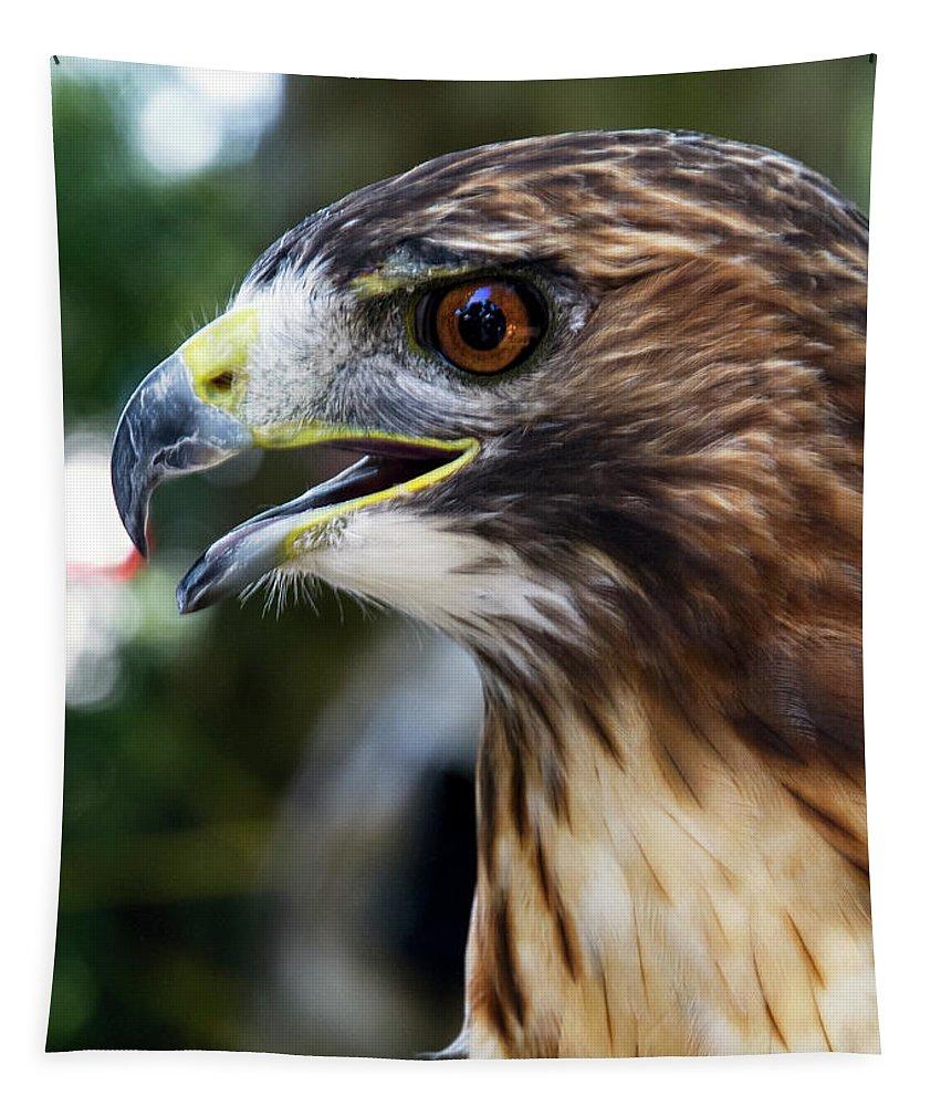 Bird Tapestry featuring the photograph Birds Of Prey Series by Bob Slitzan