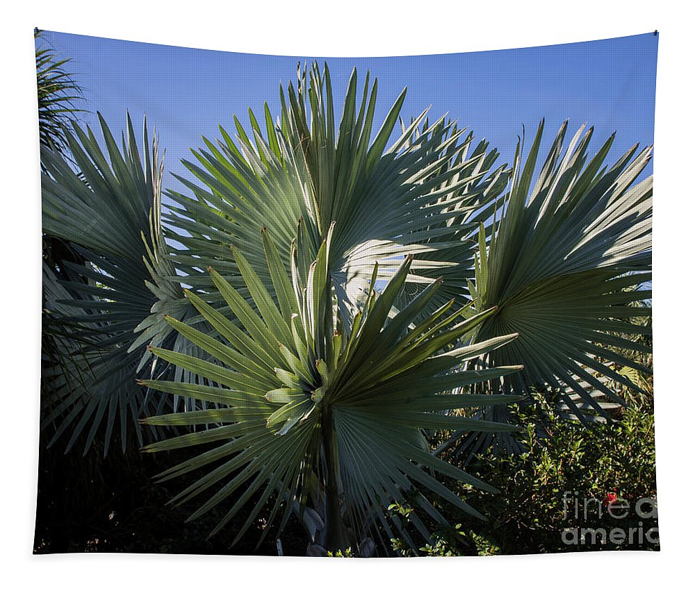 Palm Tapestry featuring the photograph Bismarckia by Zina Stromberg