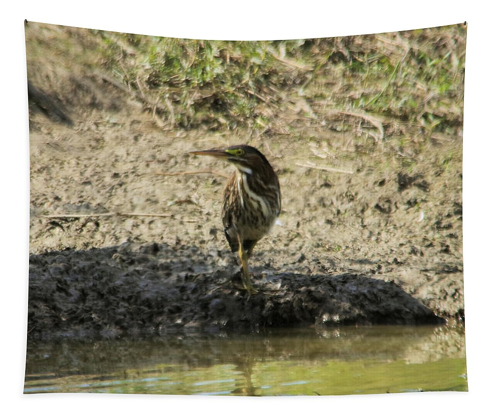 Bird Tapestry featuring the photograph Bittern by Jeff Swan