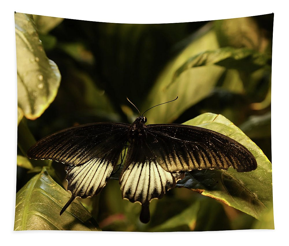 Butterflies Tapestry featuring the photograph Black And White Butterfly by Judy Vincent