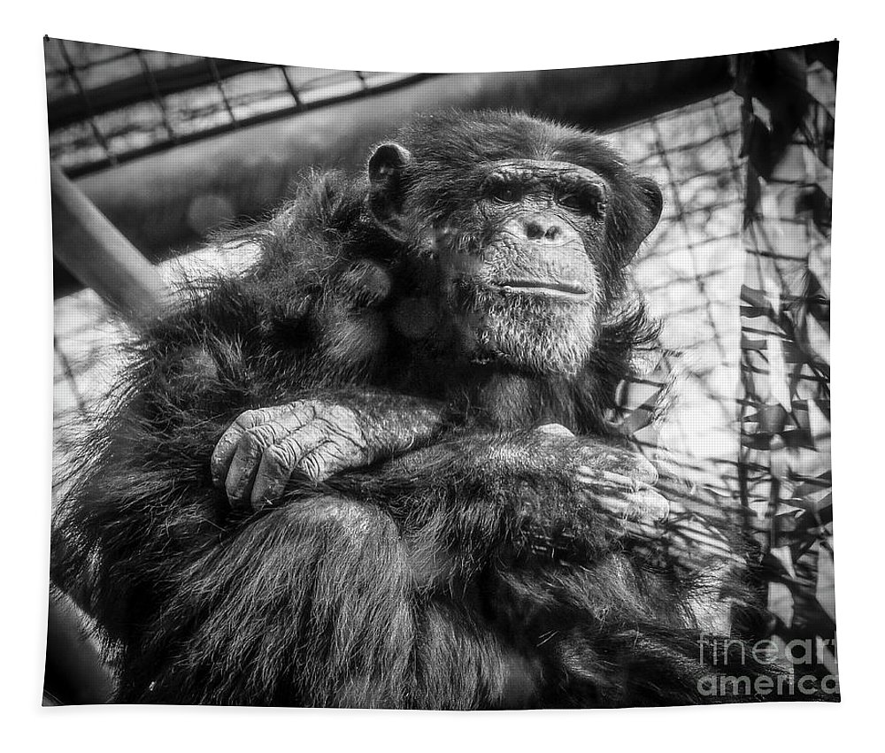 Black And White Chimp Tapestry featuring the photograph Black And White Chimp by Mitch Shindelbower