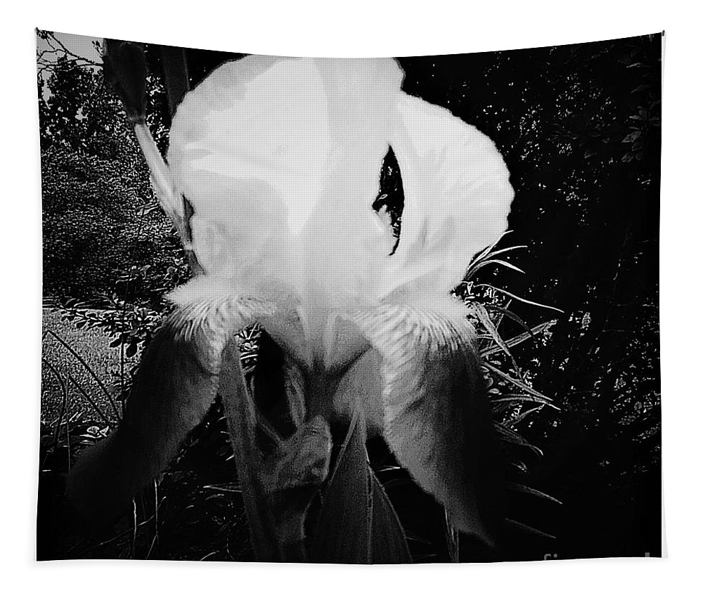 Black Tapestry featuring the photograph Black And White Iris by Debra Lynch