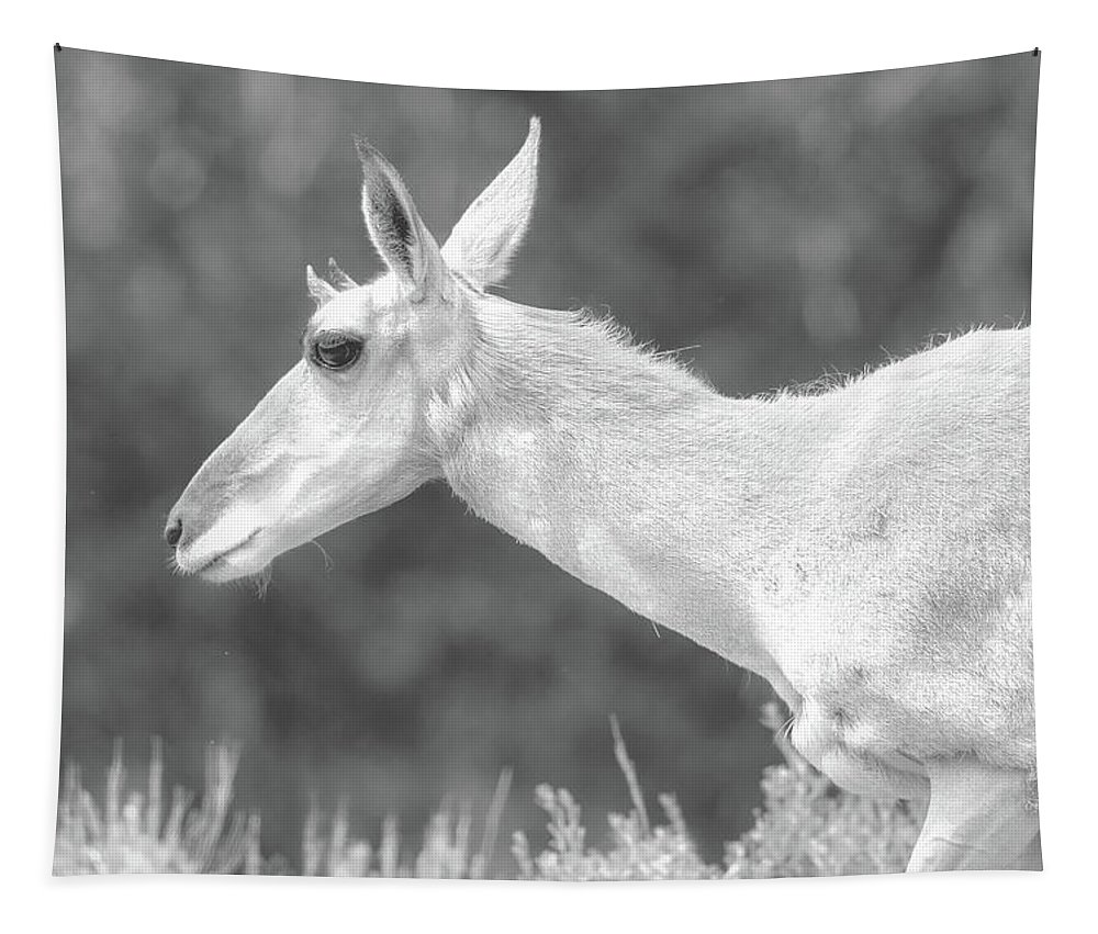 Black And White Tapestry featuring the photograph Black And White Pronghorn Portrait by Dan Sproul