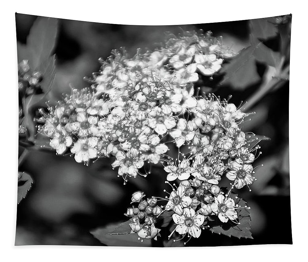 Flower Tapestry featuring the photograph Black And White Twinkle by Aimee L Maher ALM GALLERY