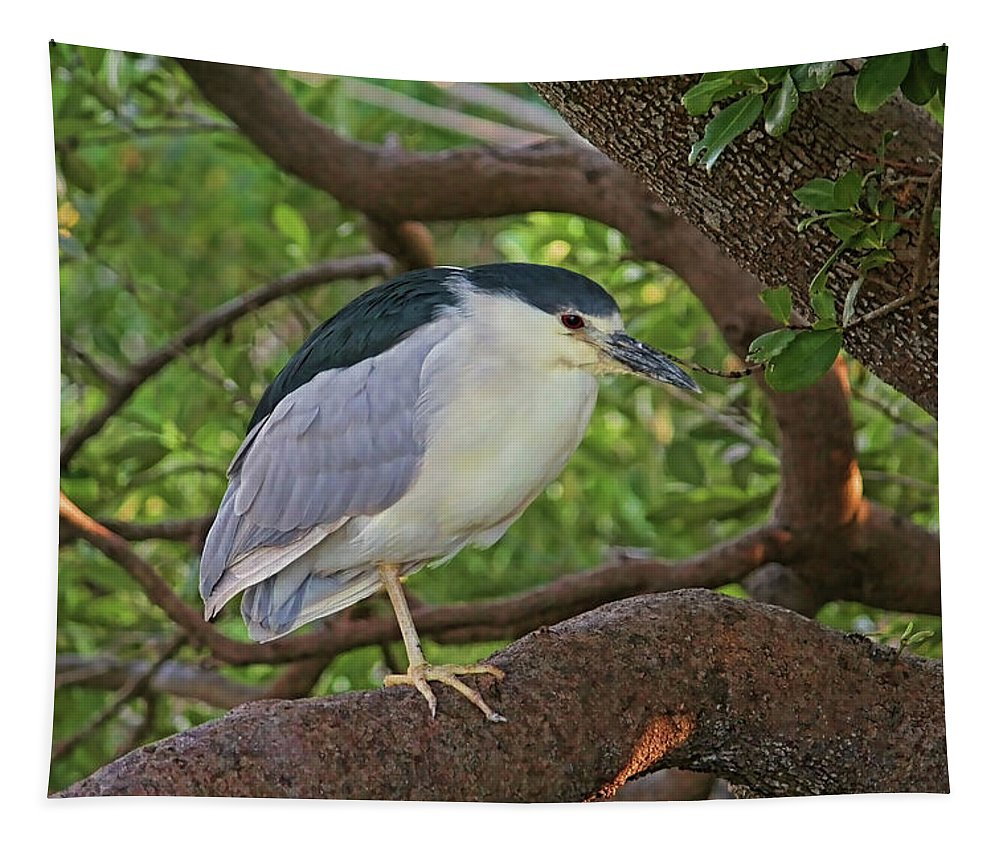 Black-crowned Night Heron Tapestry featuring the photograph Black-crowned Night Heron 2 by HH Photography of Florida