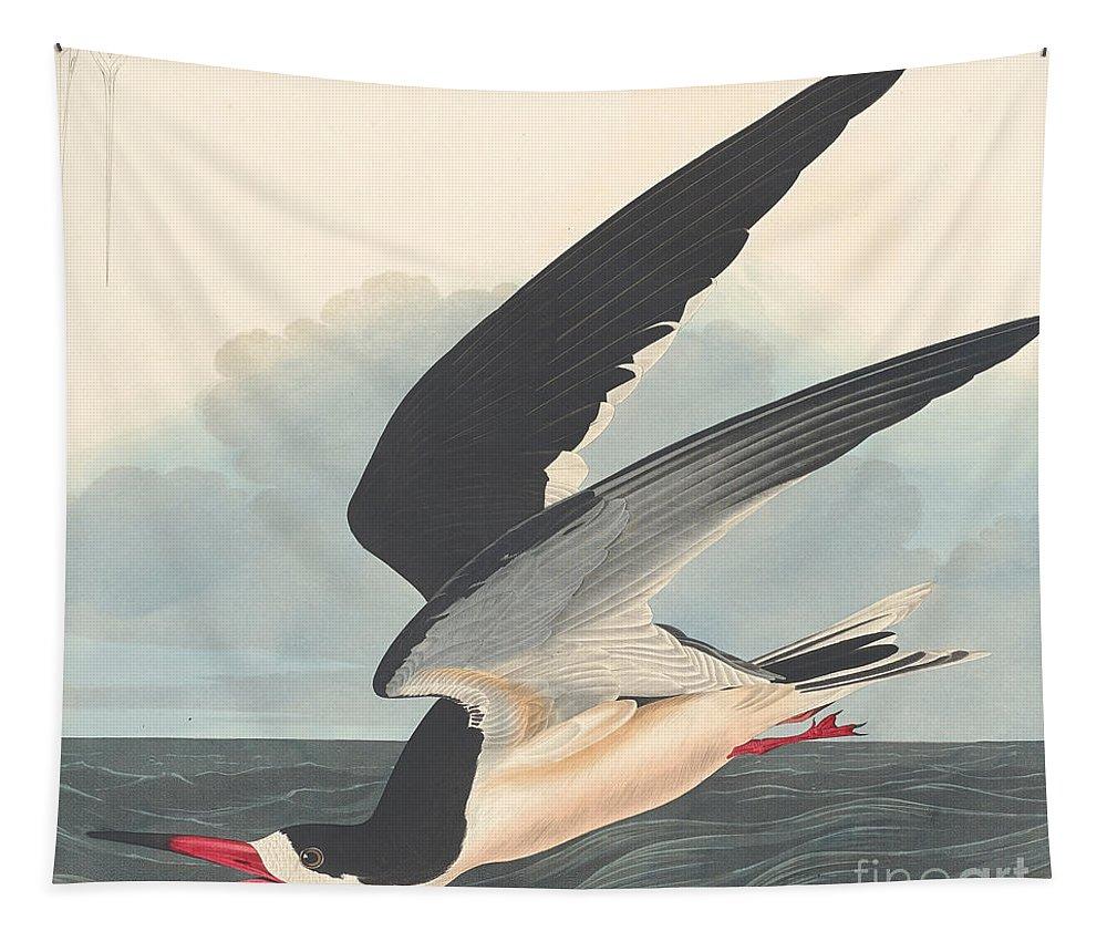 Black Skimmer Tapestry featuring the painting Black Skimmer by John James Audubon