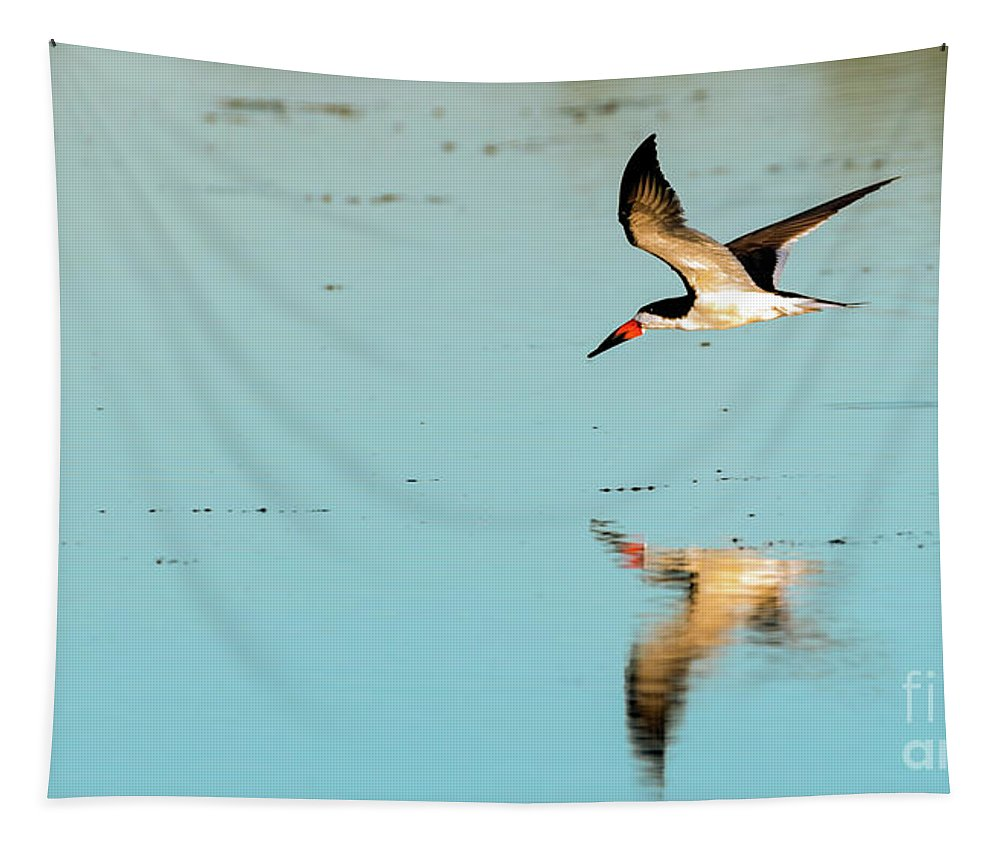 Skimmer Tapestry featuring the photograph Black Skimmer by Sam Rino