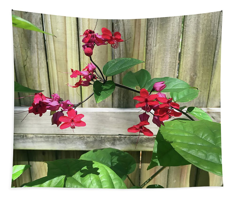 Bleeding Heart Tapestry featuring the photograph Bleeding Heart Clerodendrum 2 by Aimee L Maher ALM GALLERY