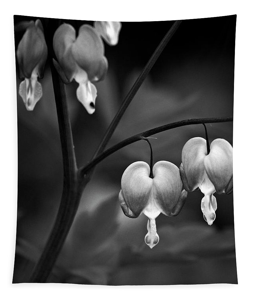 Bleeding Hearts Tapestry featuring the photograph Bleeding Hearts In Bw by Karol Livote