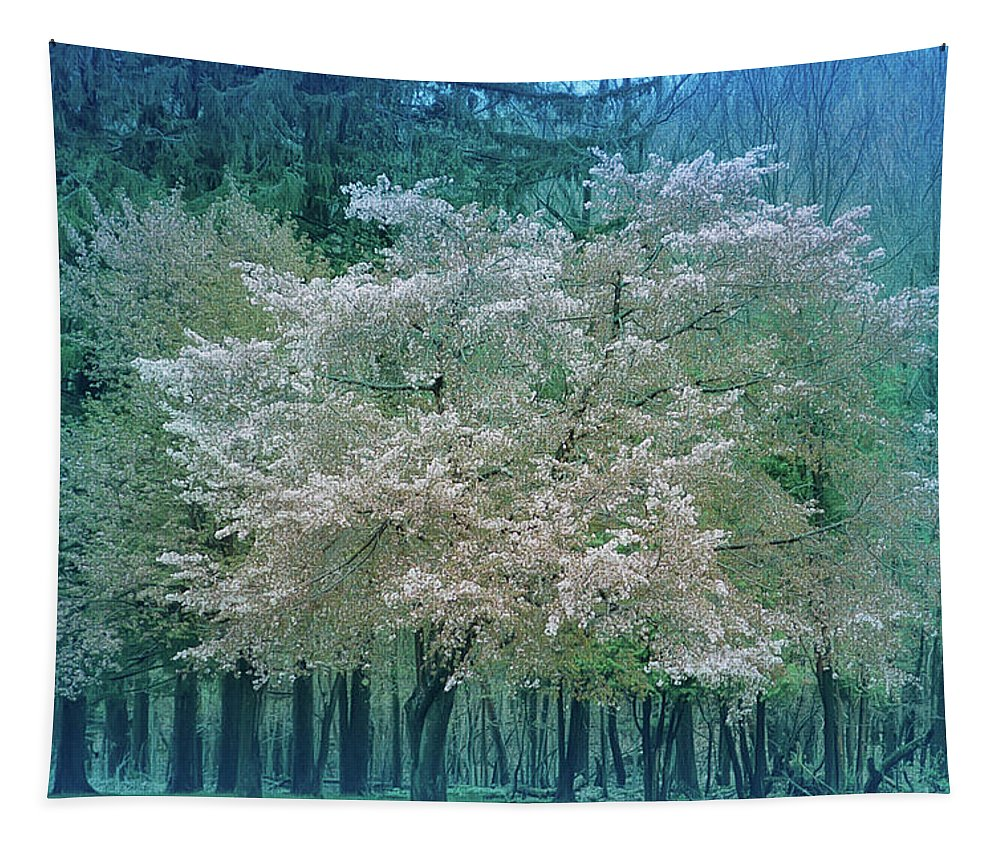 Tree Tapestry featuring the photograph Blooming Cool Blue by Aimee L Maher ALM GALLERY