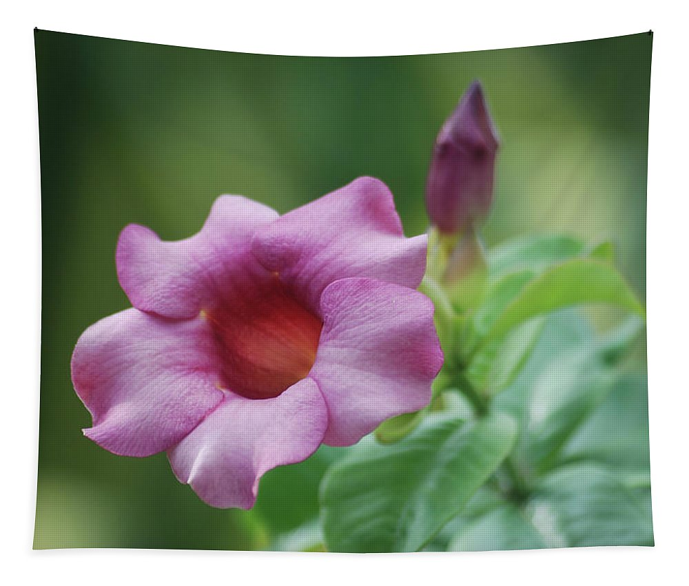 Flower Tapestry featuring the photograph Blossom Of Allamanda by Michael Peychich