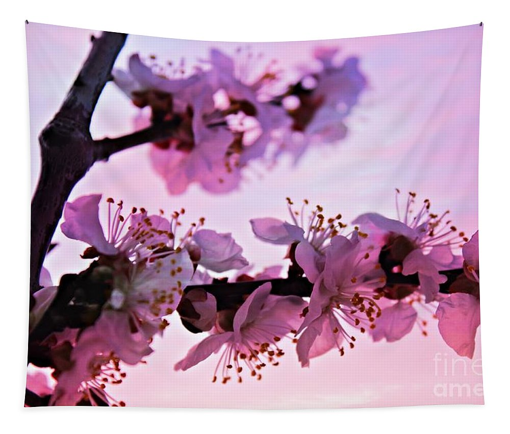 Apricot Blossoms Tapestry featuring the photograph Blossoms At Sunset by Clare Bevan